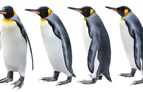 מזג האוויר בגוגל סוער – האם פינגווין 4.0 הגיע?